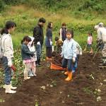 芋掘り 収穫体験